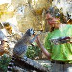 Фестиваль в честь дня рождения зоопарка в Лимасоле – 2