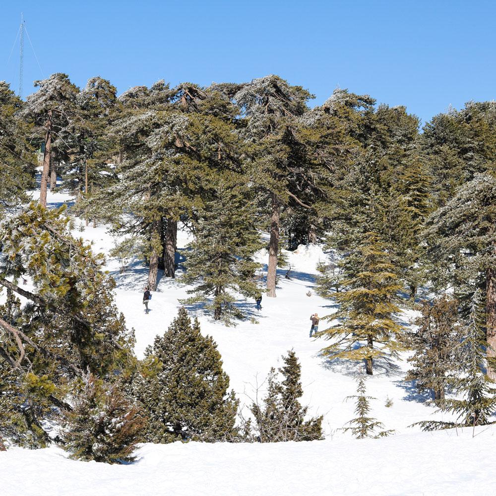 Кипр зимой. Горы Троодос.