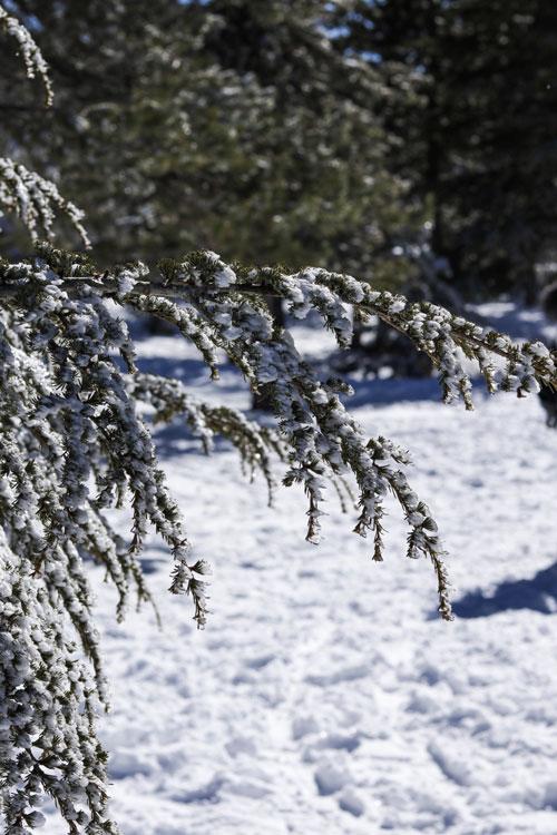 Кипр зимой. Троодос.